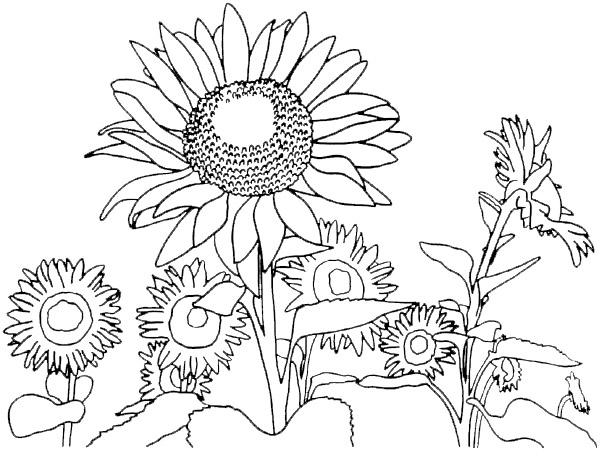Coloriage paysage printemps imprimer - Coloriage saisons a imprimer ...