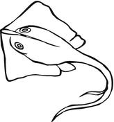 dessin de raie manta