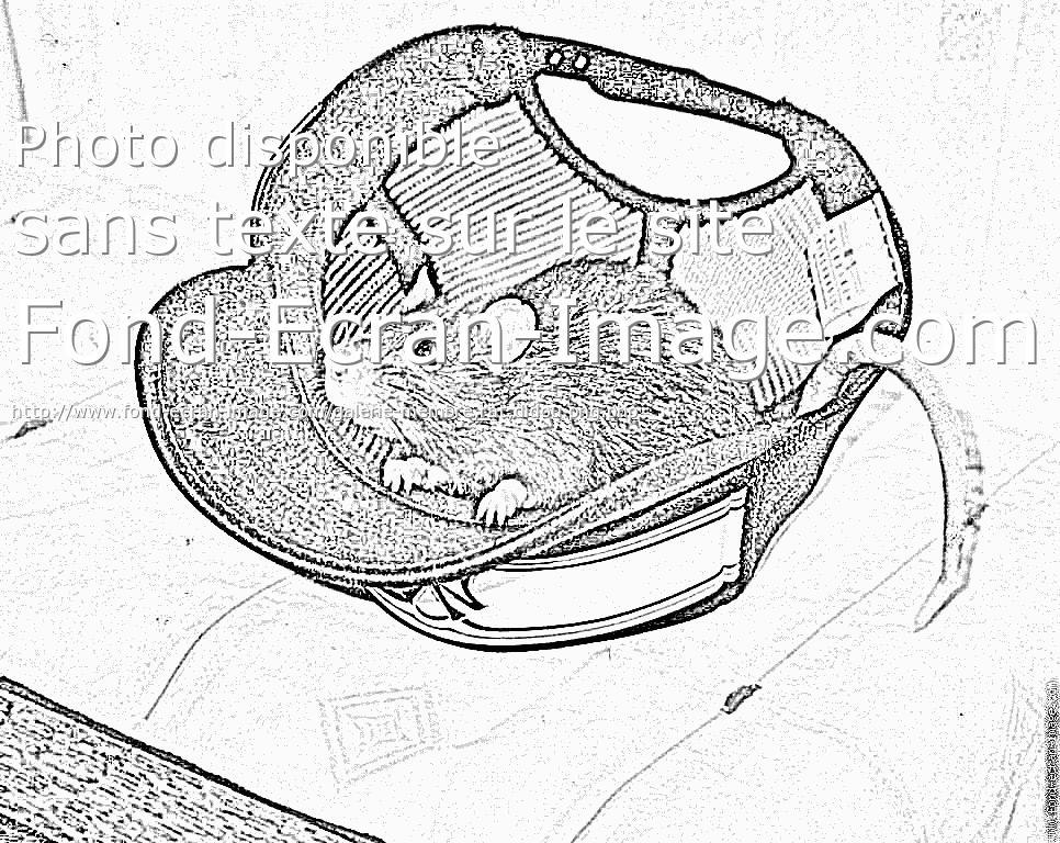 dessin à colorier de rat en ligne