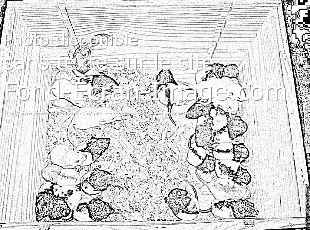 coloriage à dessiner gratuit rat