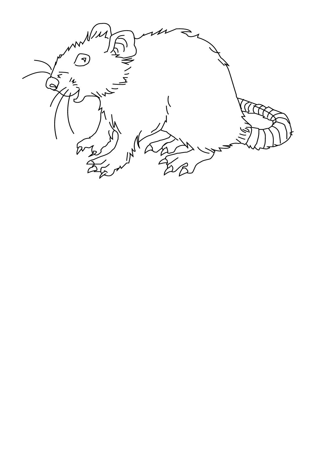 dessin à colorier en ligne rat
