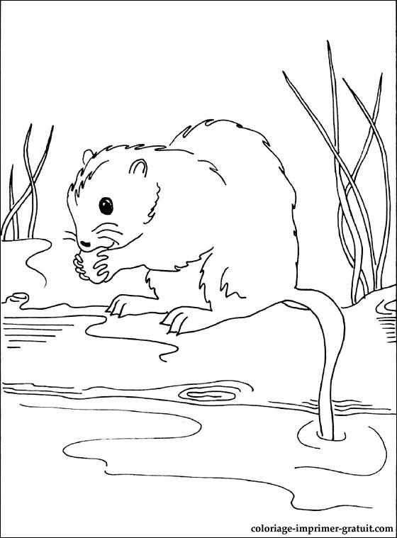 dessin lion et le rat