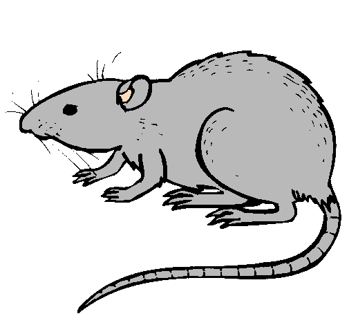 dessin rat � imprimer