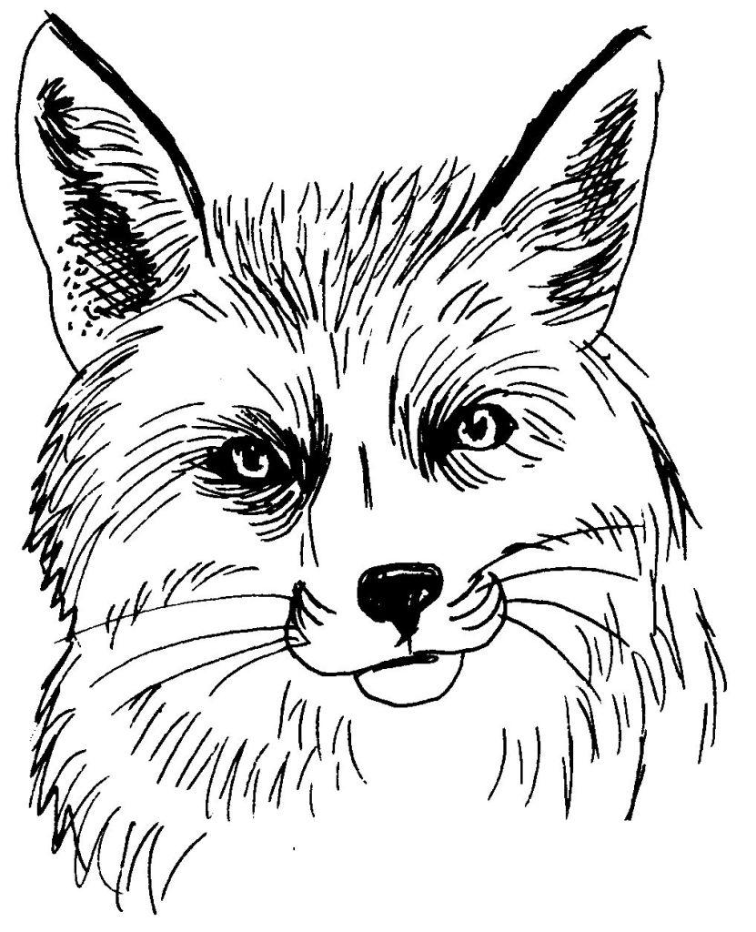 Dessin colorier renard imprimer gratuit - Coloriage corbeau ...