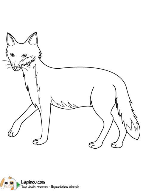 Coloriage dessiner un renard - Coloriage renard ...
