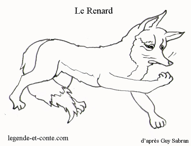 dessin de renard polaire