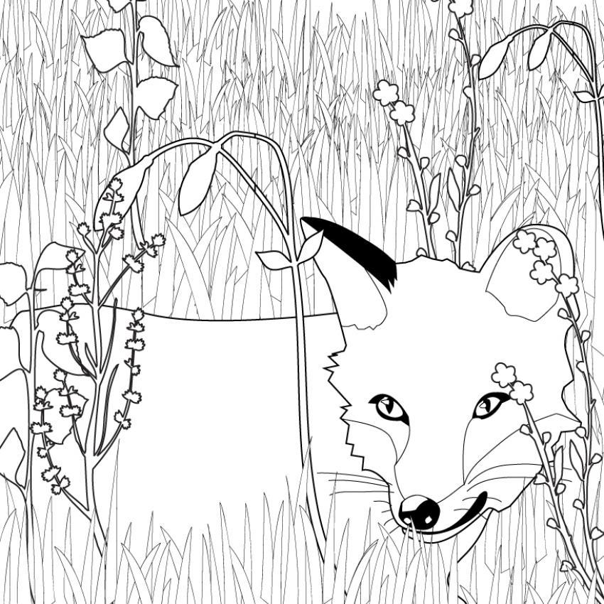 coloriage magique renard