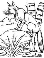 coloriage à imprimer gratuit renard