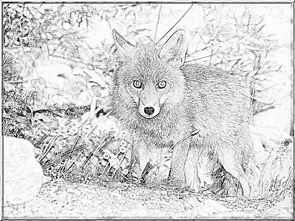 Dessin renard blanc - Image roule galette imprimer ...