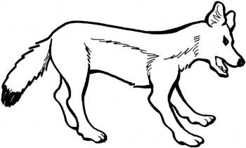 dessin à colorier renard polaire imprimer