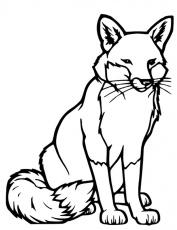 dessin renard polaire