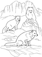 dessin le renard et la cigogne