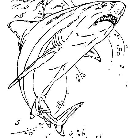 20 dessins de coloriage requin blanc imprimer - Coloriage requin a imprimer ...