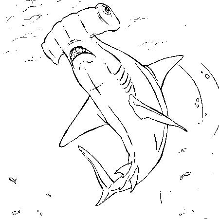 19 dessins de coloriage requin marteau imprimer imprimer - Dessin requin a imprimer ...