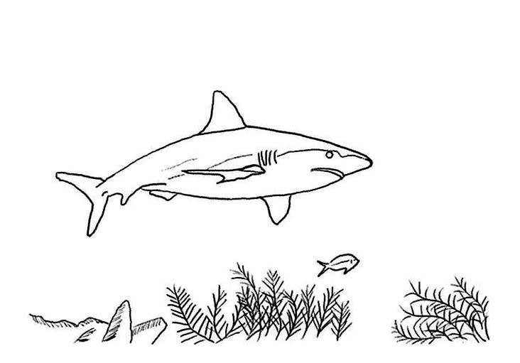 coloriage à dessiner de requin marteau en ligne