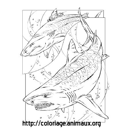 coloriage à dessiner requin d'avril