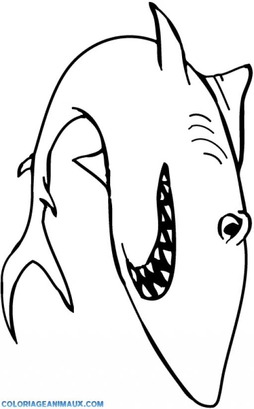 coloriage à dessiner requin dans la mer
