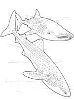 coloriage poisson requin