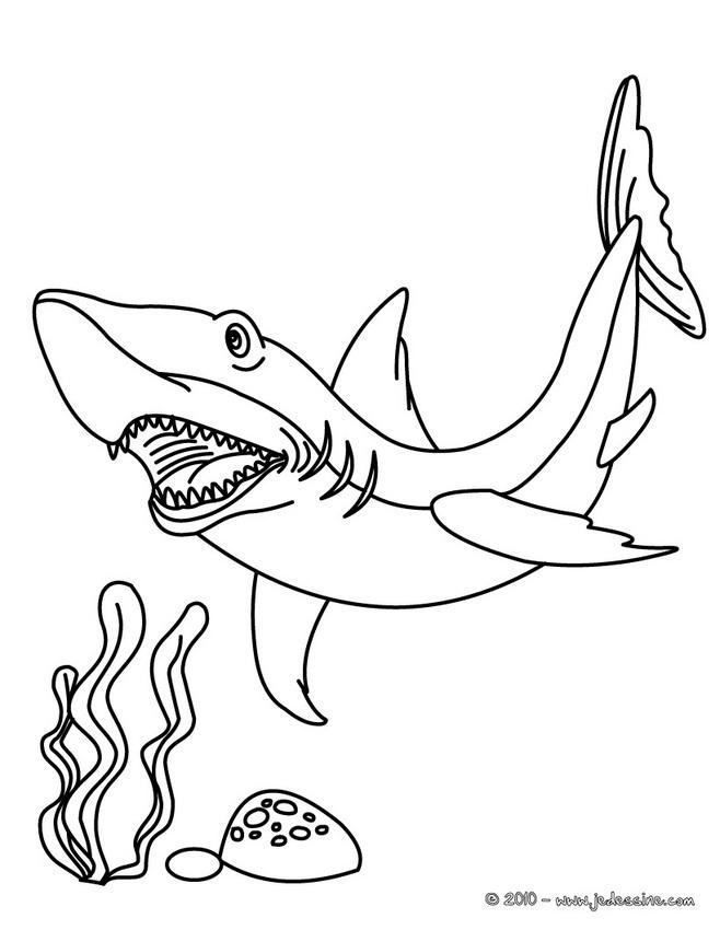 coloriage à dessiner requin gratuit