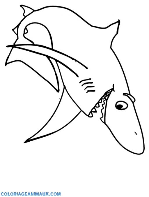 coloriage à dessiner requin blanc