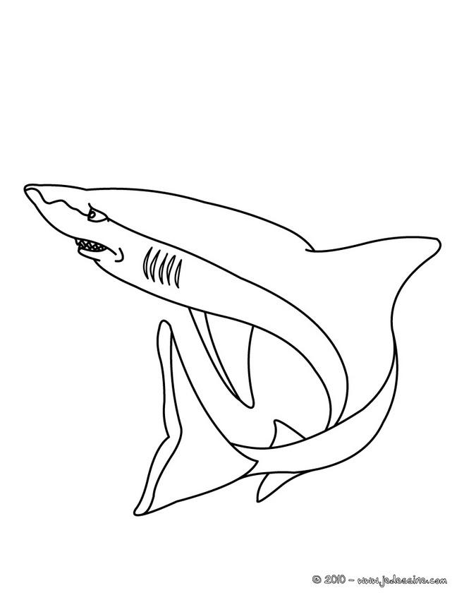 dessin à colorier de requin megalodon