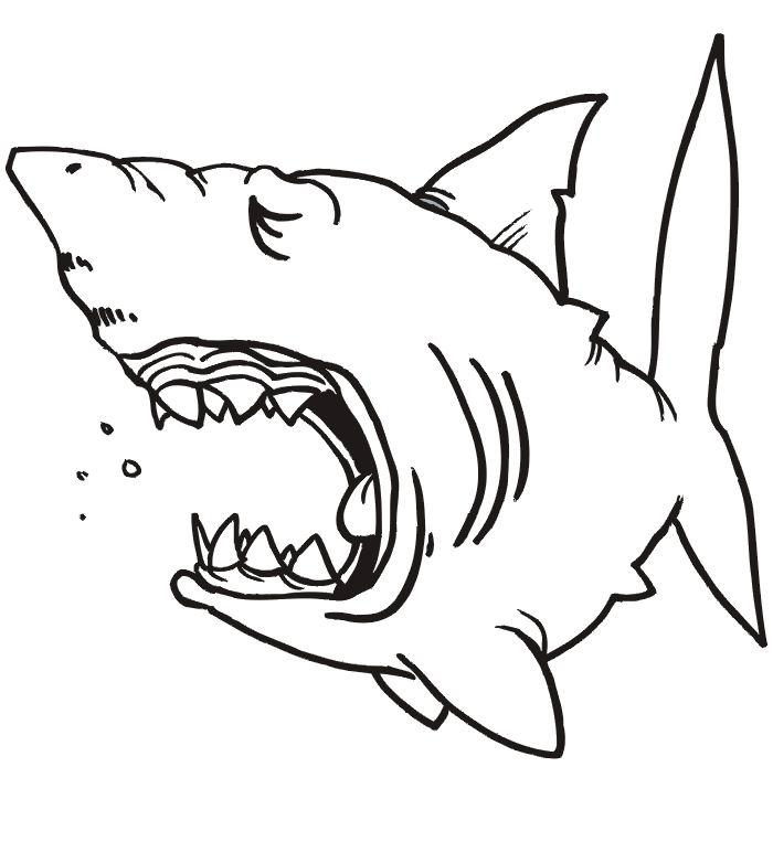 jeux coloriage à dessiner requin