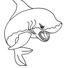dessin en ligne requin marteau