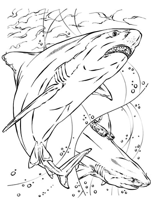 coloriage adulte requin