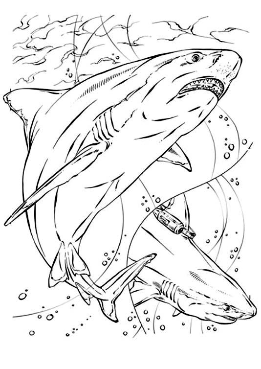 jeux dessin à colorier requin