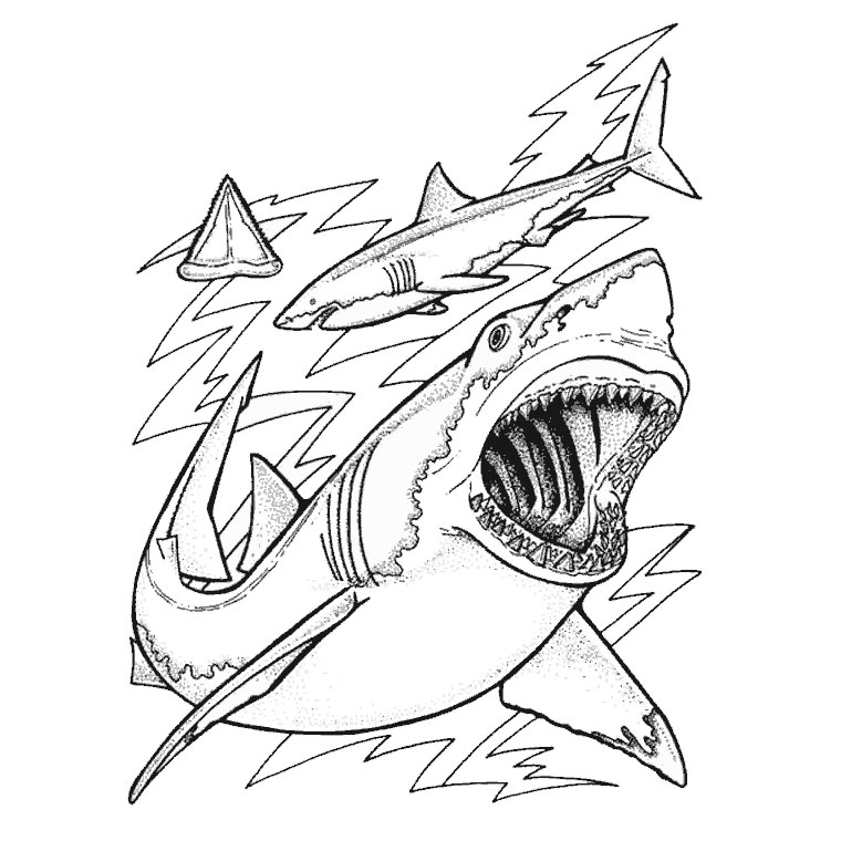 dessin requin scie a imprimer