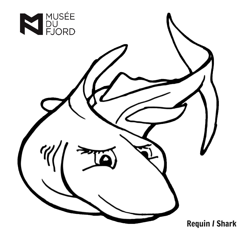 dessin requin bouledogue