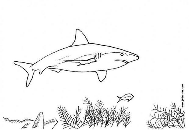 coloriage à dessiner requin en ligne