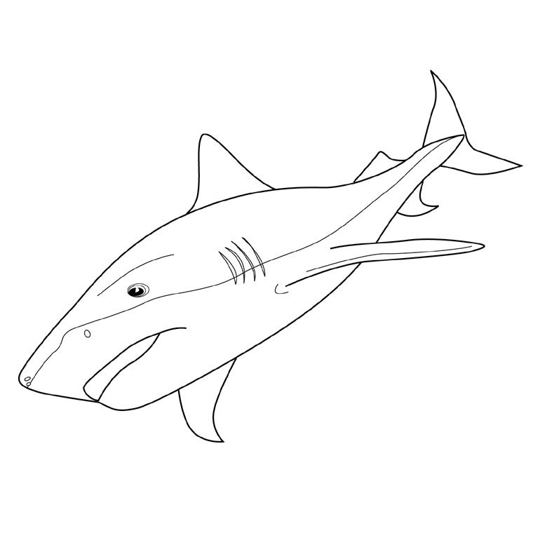 coloriage à dessiner requin gratuit à imprimer