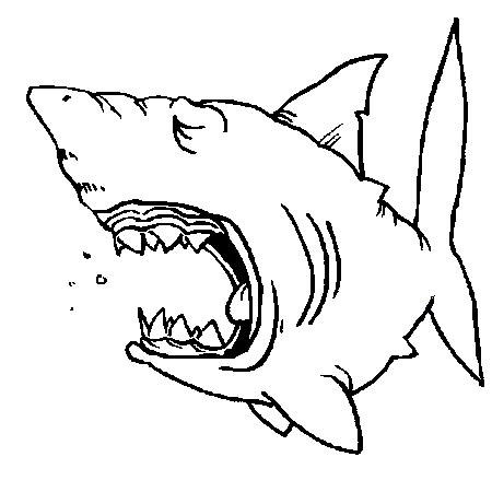 dessin à colorier requin marteau