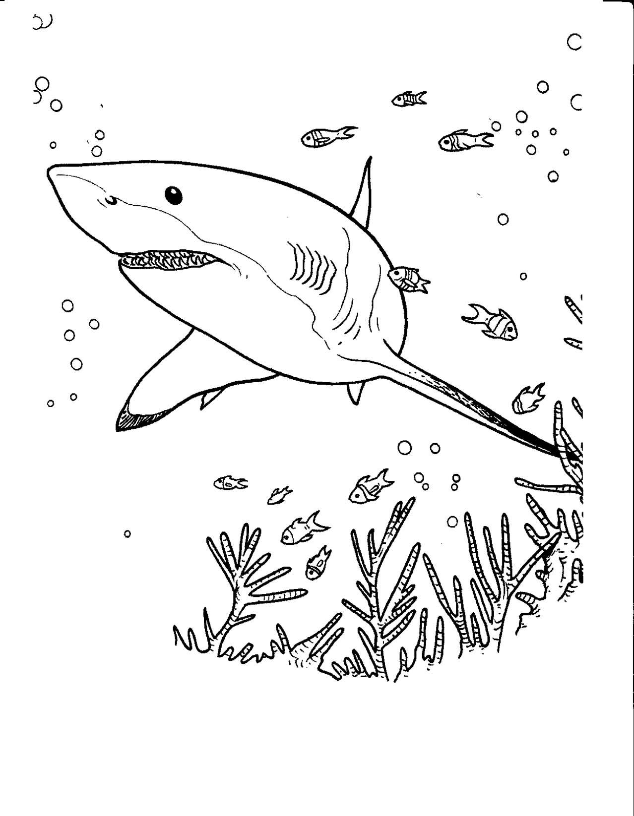 coloriage à dessiner requin nemo