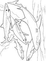dessin à colorier requin bouledogue
