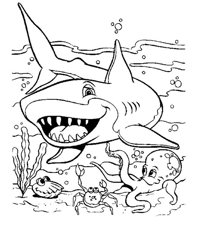 dessin à colorier de requin blanc