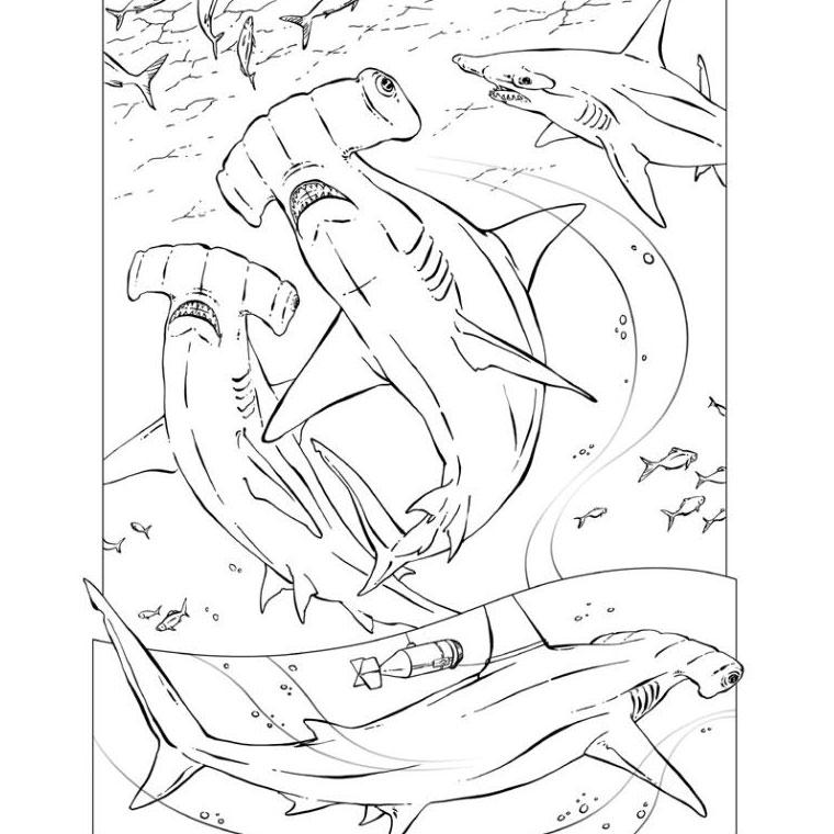 dessin à colorier bebe requin