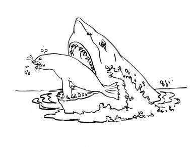 coloriage à dessiner imprimer grand requin blanc