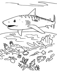 Dessin colorier requin d 39 avril - Dessin d un requin ...