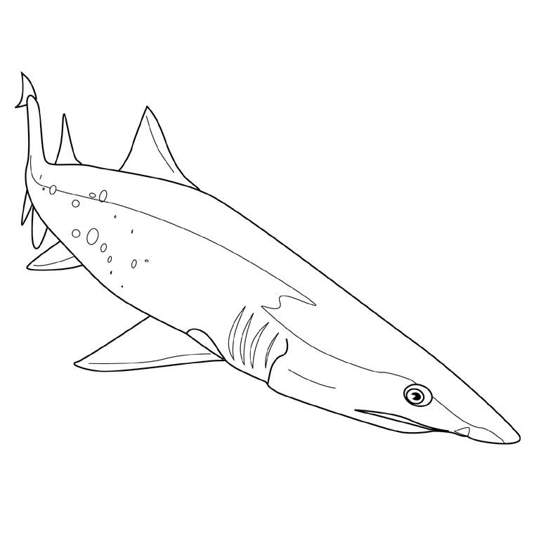 dessin à colorier requin rigolo