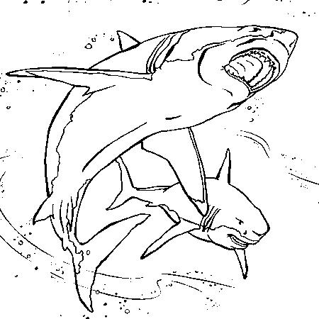 dessin à colorier les requins
