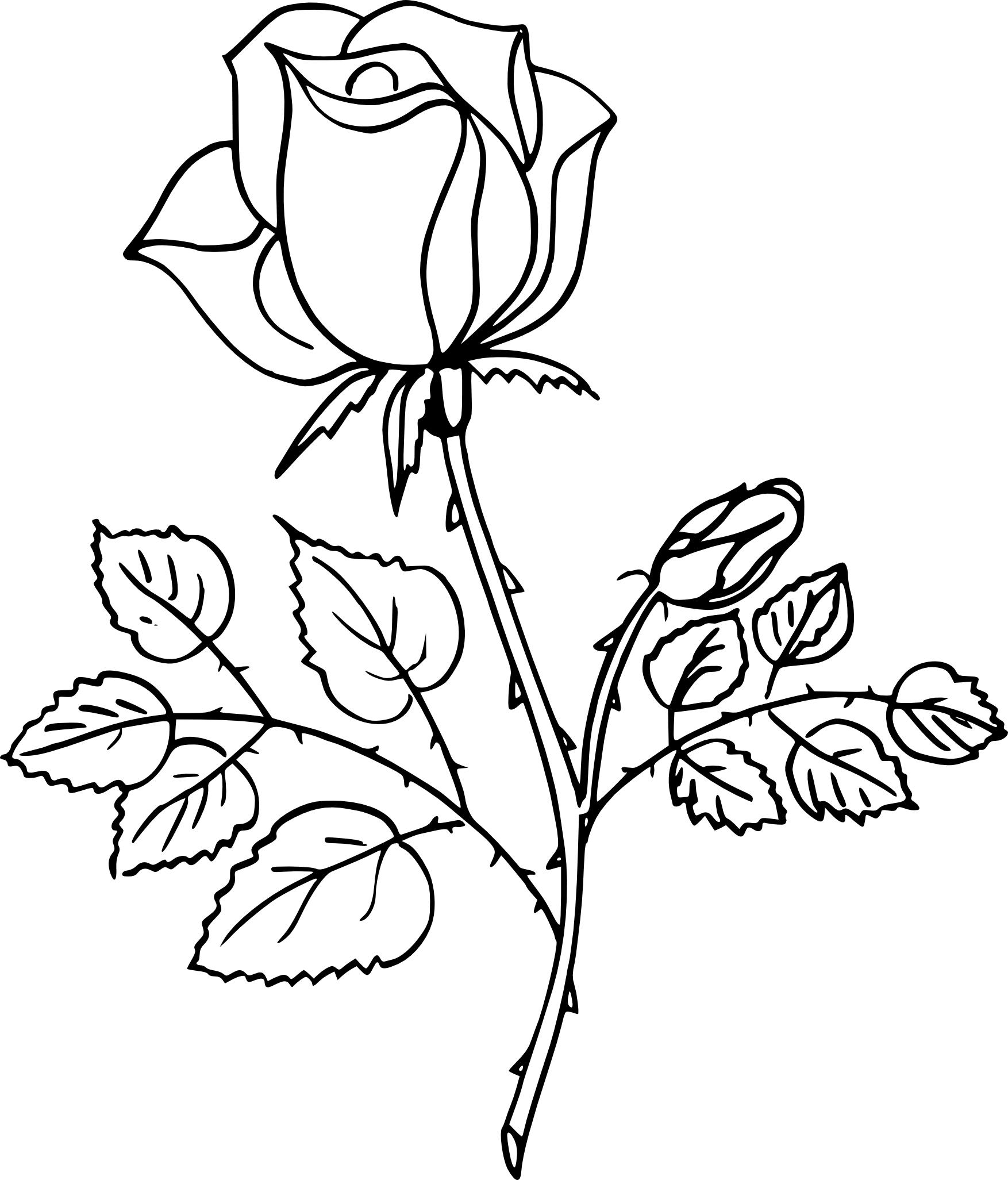 dessin nounours