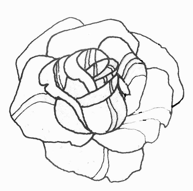 Dessin A Imprimer Fleur Rose Latest Tatouage Ancre Tatouage Fleur