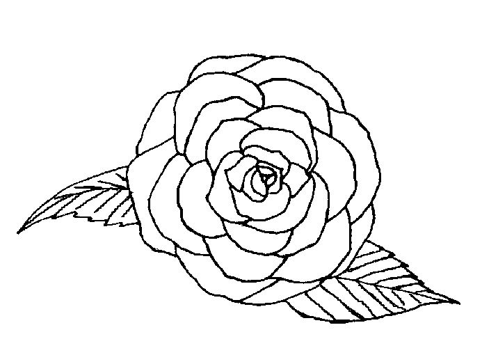 coloriage rose tremiere