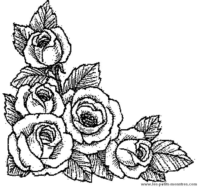 Dessin rose - Coloriage rose ...