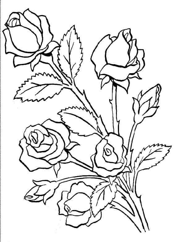 Dessin rose - Rose coloriage ...
