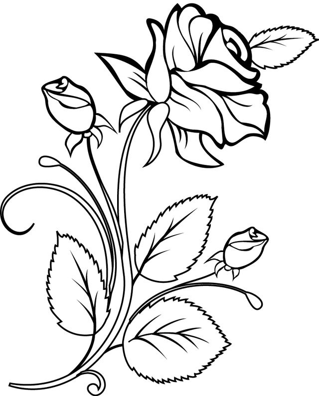 13 dessins de coloriage rosier imprimer - Coloriage rose ...