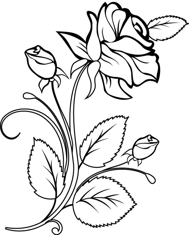 13 dessins de coloriage rosier imprimer - Comment couper une rose sur un rosier ...