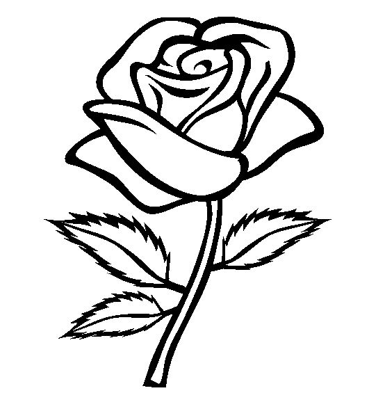 13 dessins de coloriage rosier imprimer - Dessin de rosier ...
